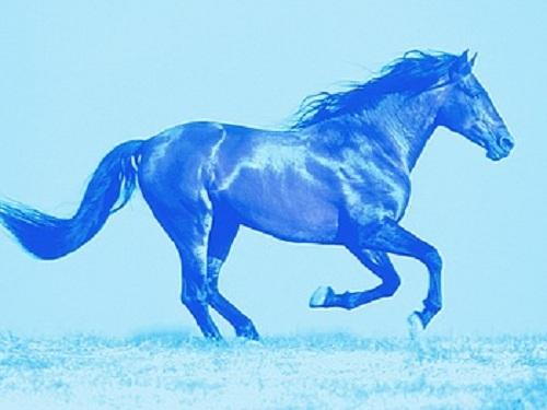 Год-лошади-2014